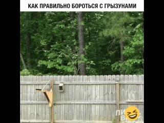 Катапульта от грызунов !!!😁😁😁