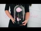 Лучший подарок к 8 марта - Долговечная роза!