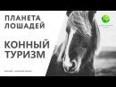 Цикл Планета лошадей   Конный туризм (5 серия)   Канал Живая планета (эфир от 03.03.2018)
