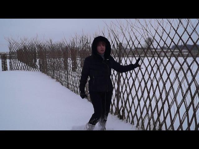 Русская ива. Зимний видео-обзор. Живая плетеная изгородь.