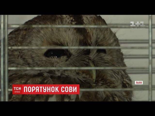 Львівянин врятував травмовану сову, що ризикувала потрапити під колеса авто