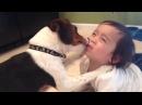 Собаки играют с детьми 3 прикол смешное видео собаки