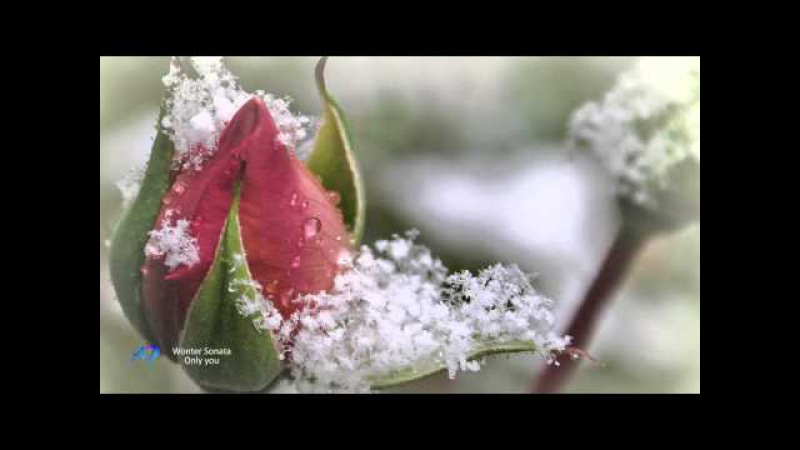 Winter Sonata(Relaxing music violin and piano)