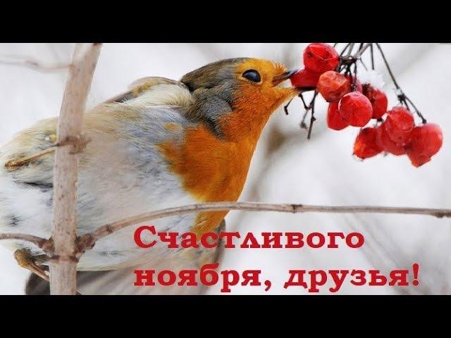 Счастливого ноября, друзья! Позитив для друзей.