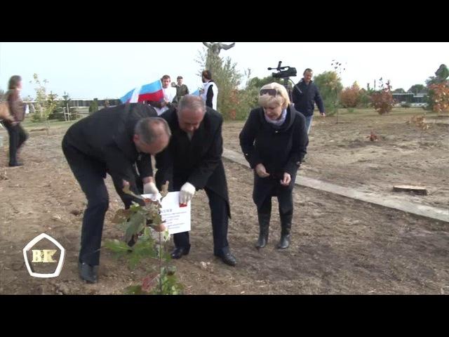 75 красных дубов из Кабардино-Балкарии высадили на Мамаевом Кургане в Волгограде 13 октября 2017