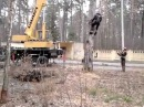 Арбористика, снос аварийных деревьев