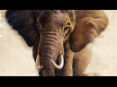 Digital speed painting of an elephant with a Wacom Intuos 4 graphic tablet