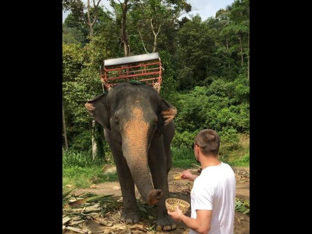 @bilanofficial on Instagram Вот вам утренний слон 🐘