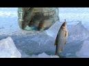 Первая рыбалка на льду 2018 НАКОНЕЦ ТО Зимняя рыбалка Ловля живца для жерлиц на щуку