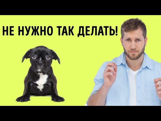 12 Человеческих Привычек Которые Собаки Терпеть Не Могут