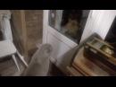 Открой дверь Открой мне!! · coub, коуб
