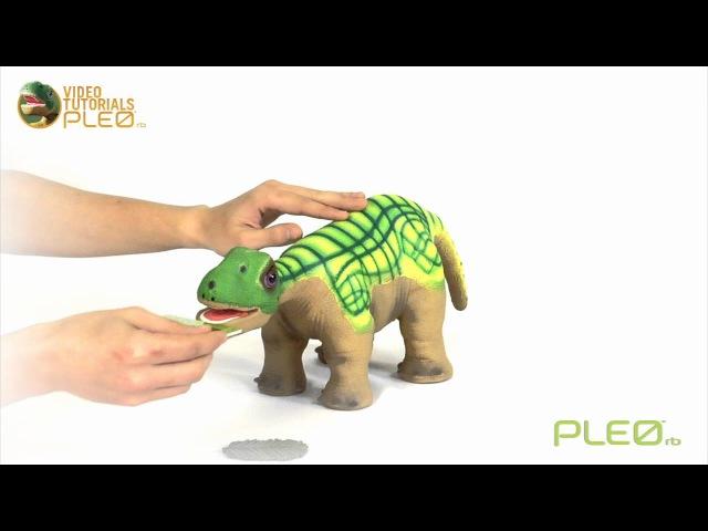 Робот-динозавр Pleo rb - как назвать