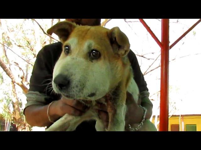 Спасение собаки с распухшей мордочкой / О собаке, человеке, и не только...