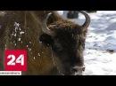 Застройщик поставил под угрозу экосистему Приокско Террасного заповедника Россия 24