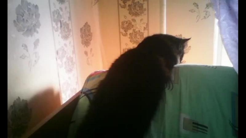 моя кошка :^