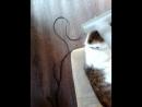 мой кот лентяй
