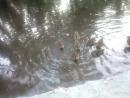 дикие утки на р. Елшанка