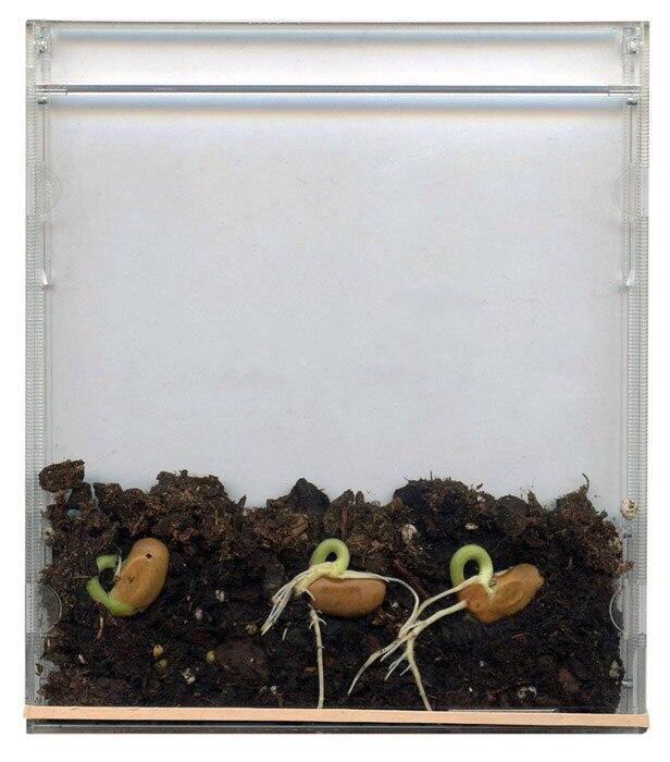 ростки дома