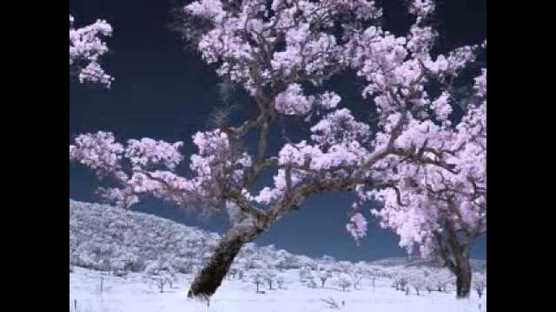 Morningside-Neil Diamond.