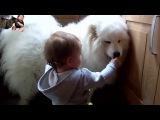 Кошки и собаки, которые любят детей ))