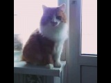 helga_shpelga video