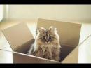 Смешно до слез про кошек Смешные приколы 2018 8 Котейки ТОП 50
