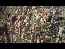 Почему нельзя делать летнюю и осеннюю обрезку плодовых деревьев?