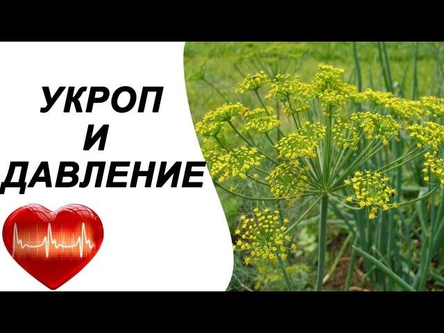 Укроп от повышенного давления, лечение народными средствами. Семена укропа при гипертонии