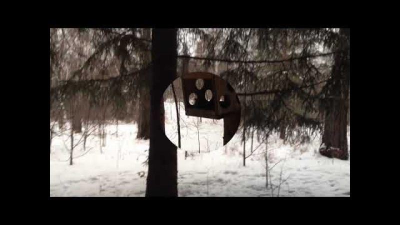 Белки в зимнем парке. Утренняя прогулка.Новосибирск.