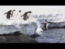 Penguin Dance Song for Kids Fun Penguin Songs for Children The Kiboomers