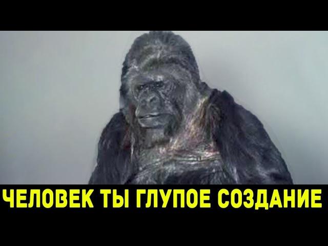 Удивительный интеллект обезьян