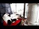 対流型石油ストーブの前の3匹の猫 Cat to warm by a heater
