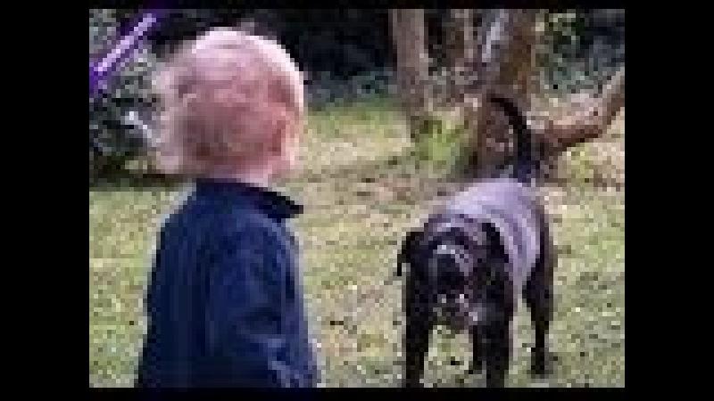 Социальный ролик! Осторожно - злые собаки. Social video - Carefully evil dogs