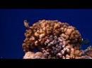 Подводный мир Красного моря.Шарм эль Шейх.14.11.17 г.