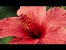 Как распускаются цветы – потрясающее видео