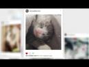 Кот Зик и его инста