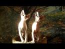 Котята донского сфинкса Три богатыря