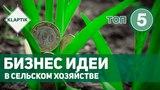 ТОП-5 Бизнес идеи в сельском хозяйстве