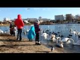 Лебеди зимой в Севастополе