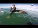 Франция: Seal surprises Surfers - Quiberon 24 TV