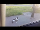 Прогулка с котом