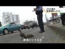 NEWS WEB EASY道を渡ろうとしたカモの親と赤ちゃんを警官が案内する