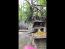тай.ленивец и дикобразы