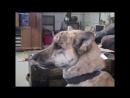 Говорящая собака. Говорящие животные. S01.E01.mp4