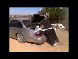Арабская ночь (хорошее настроение, юмор, Алладин, Жасмин, Волшебная лампа джина, восток, верблюды, ковер самолет, песня пустыня)