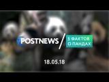 18.05 | 5 фактов о пандах