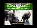 Фильм про бездомных животных