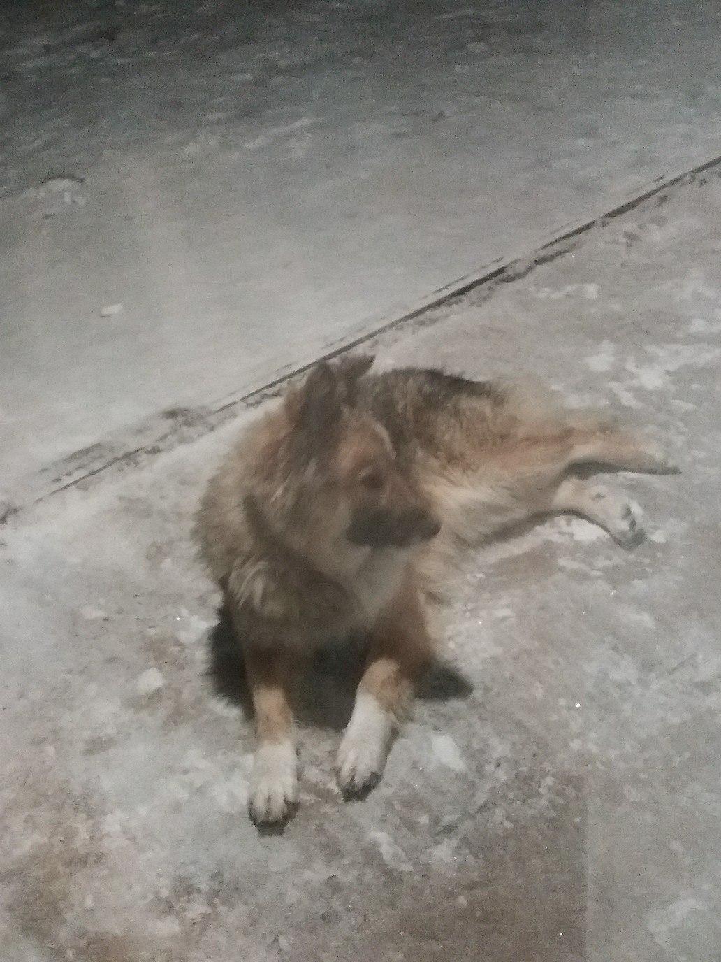 Помогите найти хозяина пса.