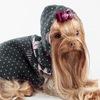 Prince and Pricess одежда и аксессуары для собак