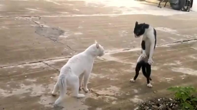 Кот, владеющий восточными единоборствами в стиле кобра